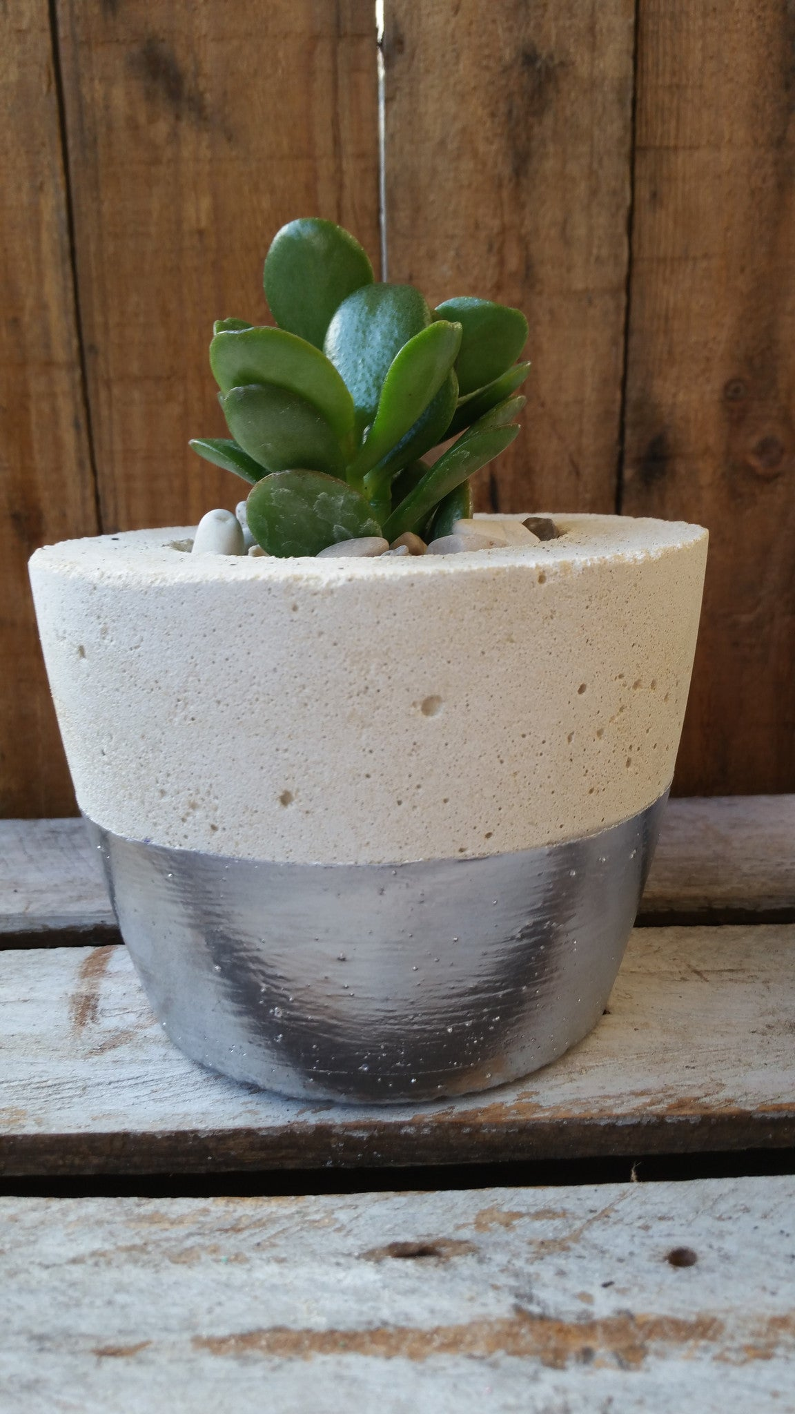 Cream concrete planter with chrome coloured band and succulent