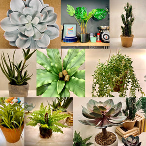 How to transform your home with indoor plants