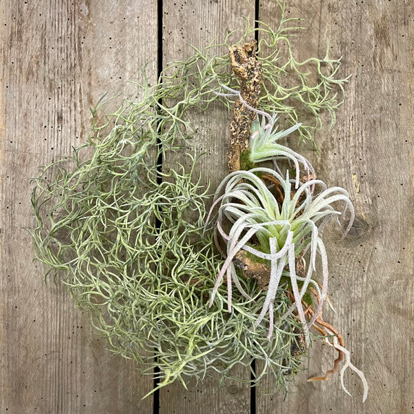 Faux Hanging Air Plant on Mossy Stick - mylesfromhome.co.uk