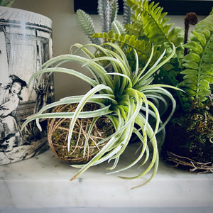 Faux Air Plant Hanging Ball - mylesfromhome.co.uk