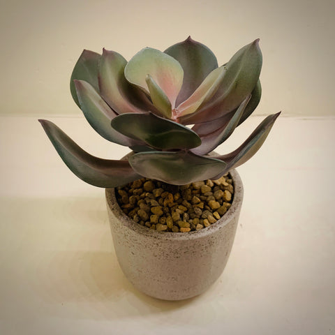 Faux Potted Echeveria Blush Green (Small) - mylesfromhome.co.uk