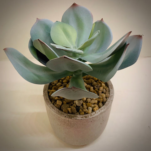 Faux Potted Echeveria Dusky Green (Small) - mylesfromhome.co.uk
