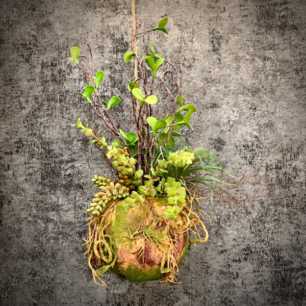 Faux Hanging Moss Ball with Mixed Plants - mylesfromhome.co.uk