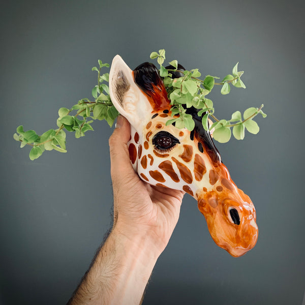 Ceramic Giraffe Head Wall Sconce Vase - mylesfromhome.co.uk