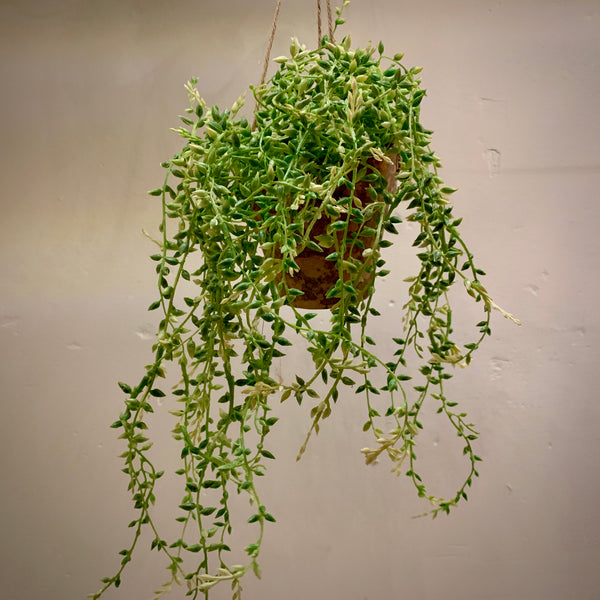 Faux Potted Hanging Senecio - mylesfromhome.co.uk
