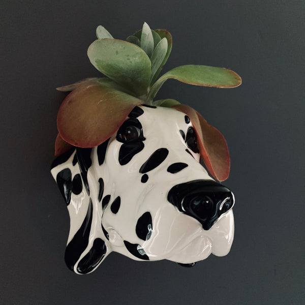 Ceramic Dalmatian Head Wall Sconce Vase - mylesfromhome.co.uk