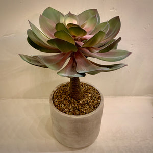 Faux Potted Echeveria Blush Green (Large) - mylesfromhome.co.uk