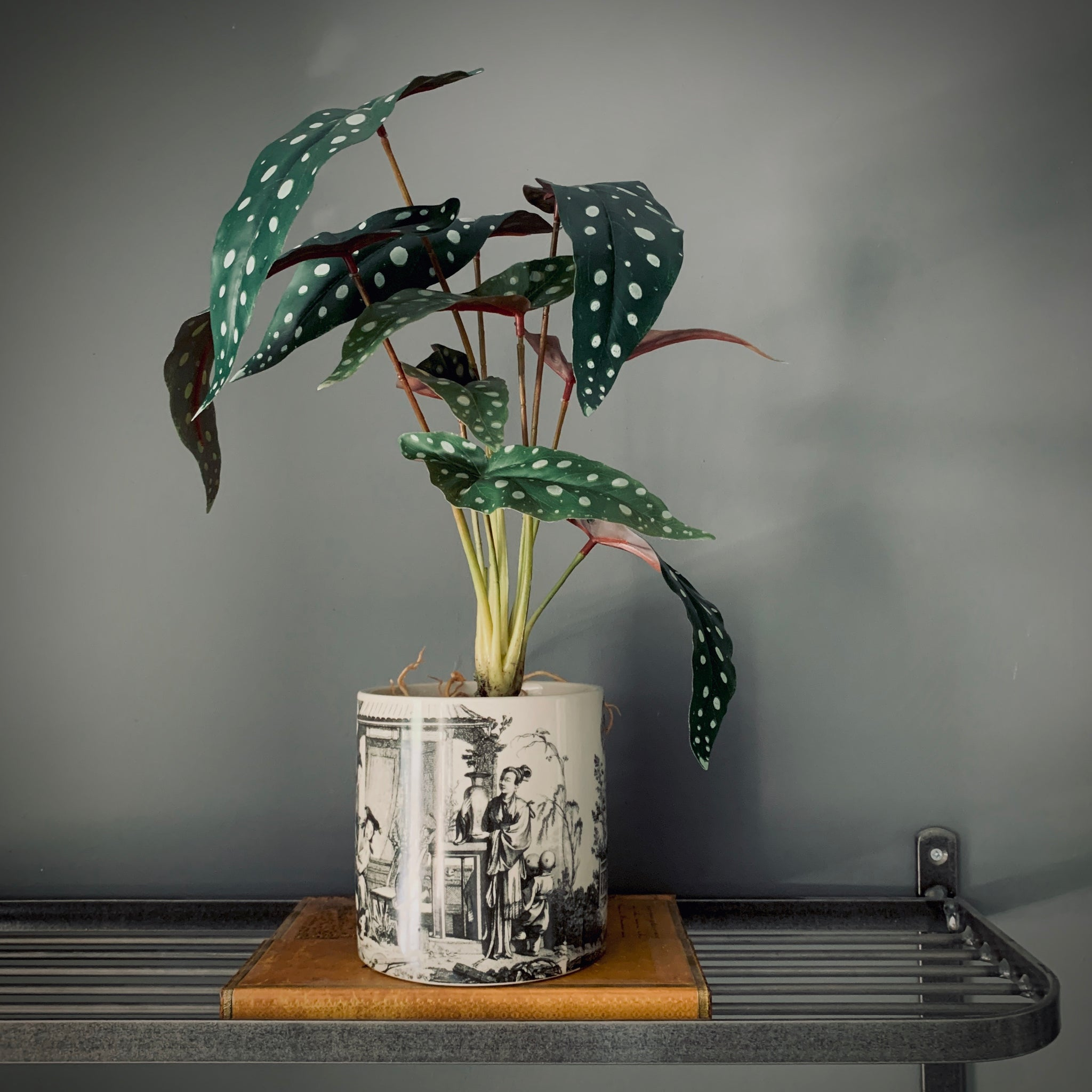 Faux Potted Philo Leaf Plant - mylesfromhome.co.uk