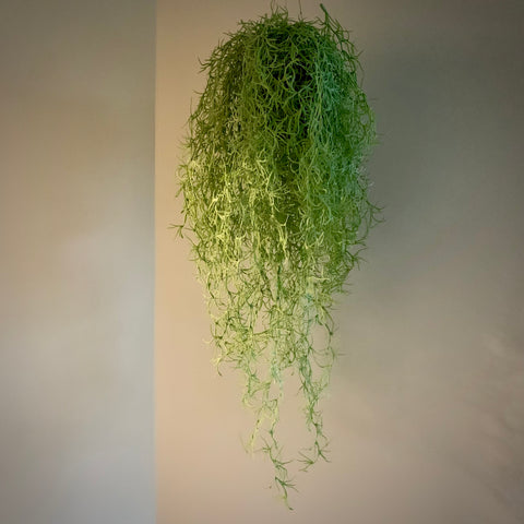 Ornamental Hanging Air Plant - 'Cher' - mylesfromhome.co.uk