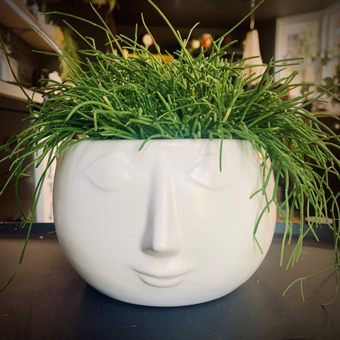 Heads Up Planter: White - mylesfromhome.co.uk