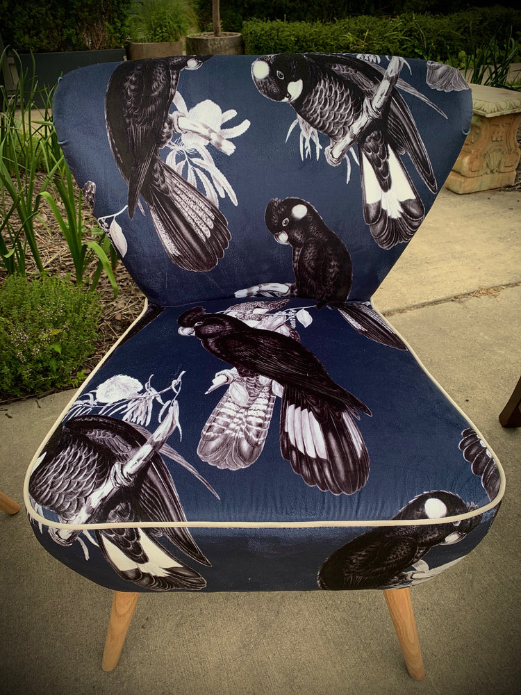 Black Cockatoo on Indigo Velvet