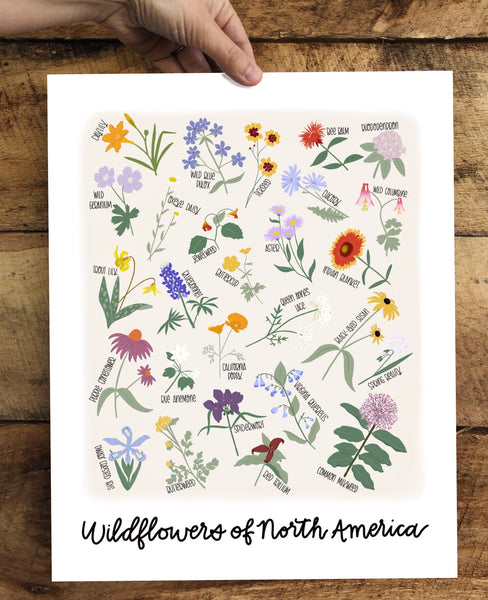 PRINT- Wildflowers of North America