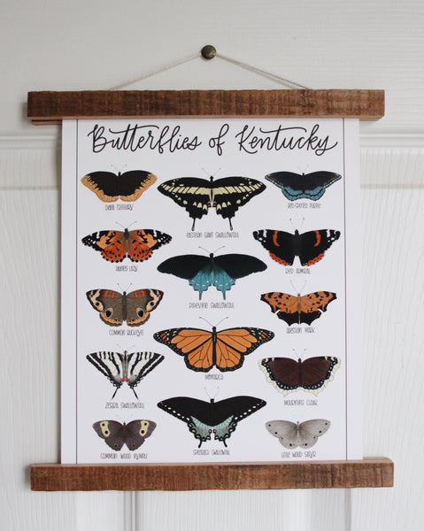 PRINT- Butterflies of Kentucky
