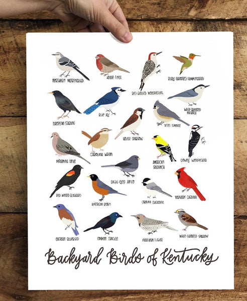 PRINT- Backyard Birds of Kentucky