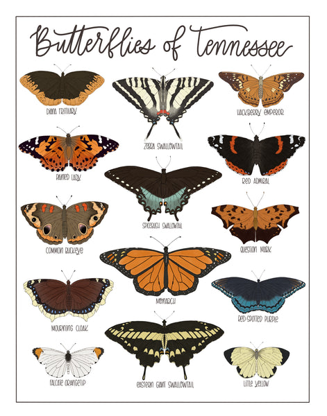 PRINT- Butterflies of Tennessee