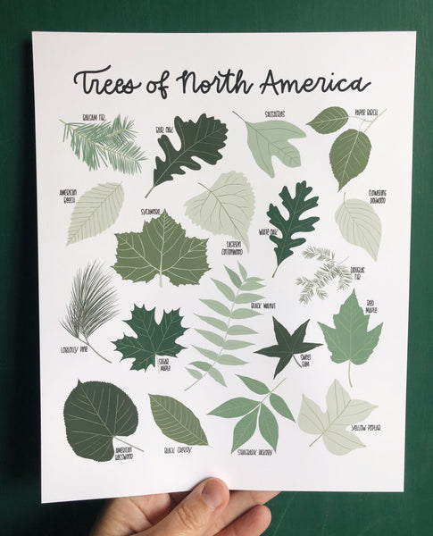 PRINT- Trees of North America
