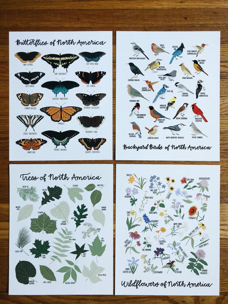 8x10 Natural History Print Bundle