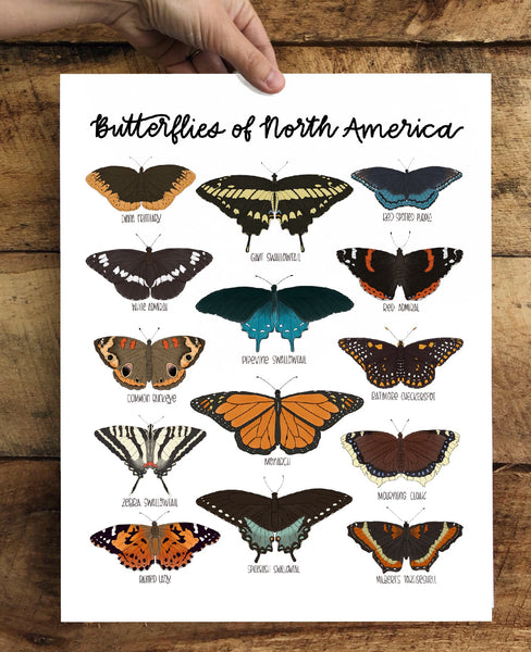 PRINT- Butterflies of North America