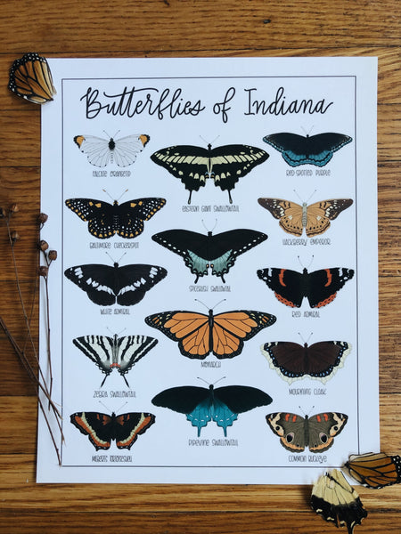 PRINT- Butterflies of Indiana
