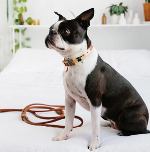 Two Tone Dog Collar : Shapes