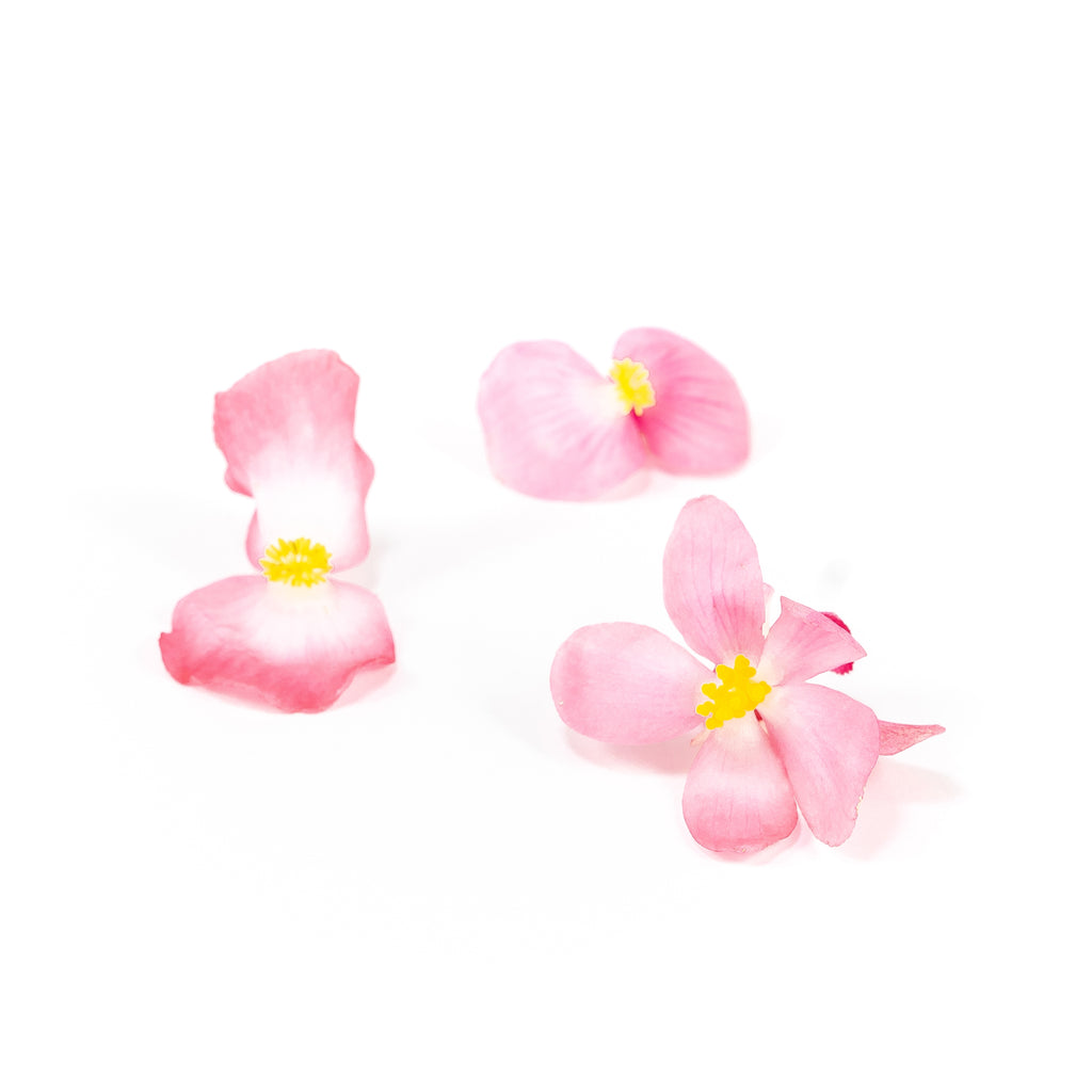Pink Begonia Edible Flowers