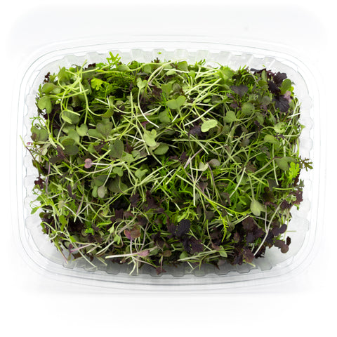 Spicy Micro Mustard Greens