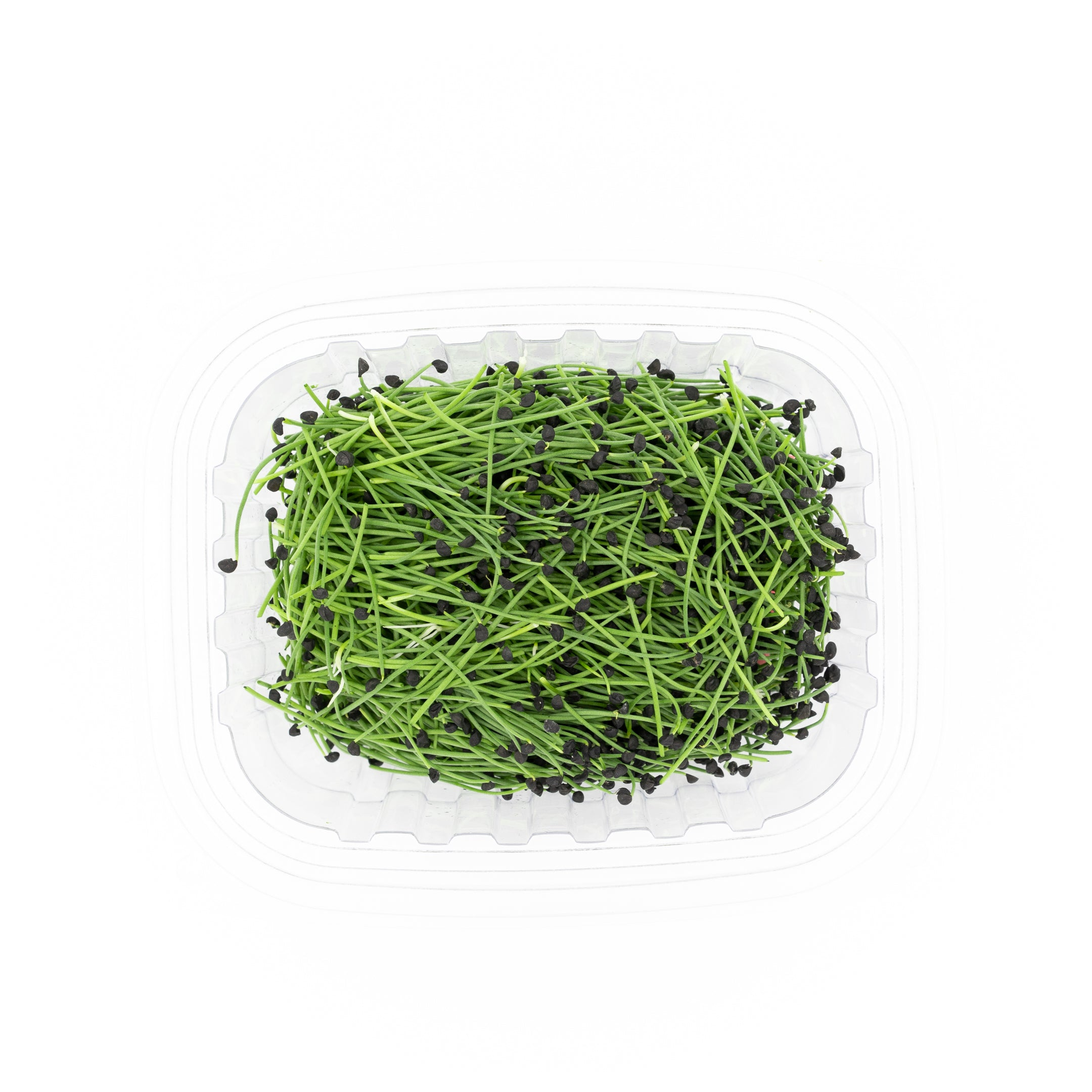 Micro Onion Sprouts