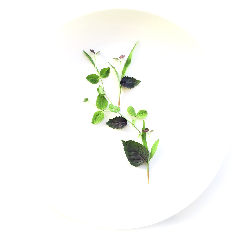 Local Micro Pea Shoots