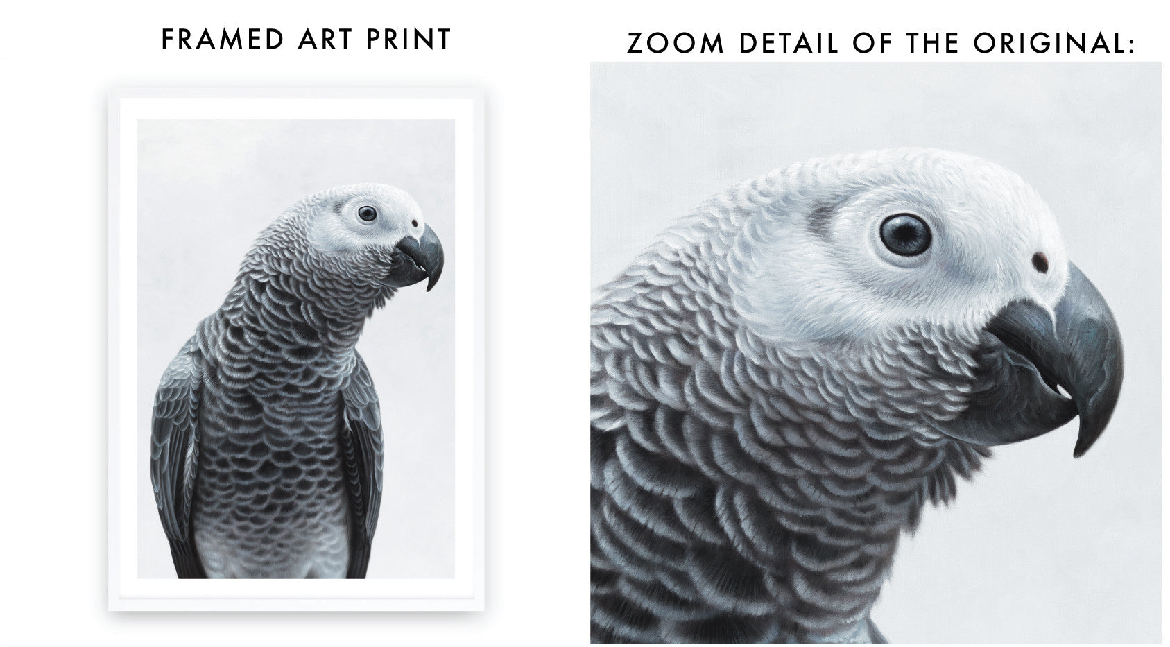 African Grey Parrot Art Print By The Print Emporium