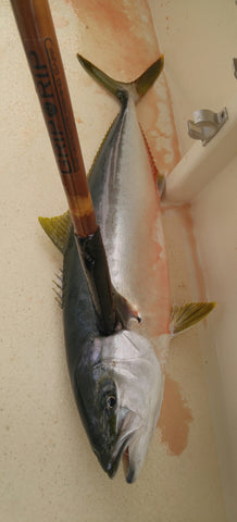 grip n rip yellowtail