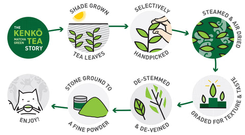 How Kenko Matcha Tea Powder is made- Kenko Matcha Guide