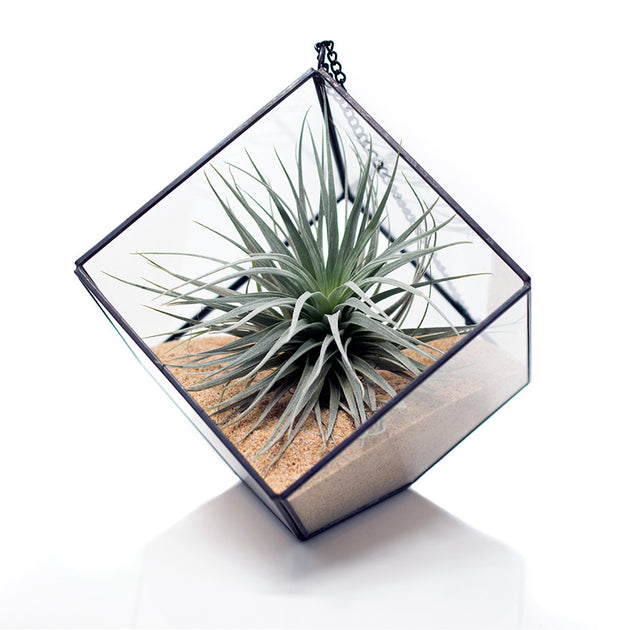 Geometric Terrarium with sand and houston red air plant sold at Bear Valley Nursery