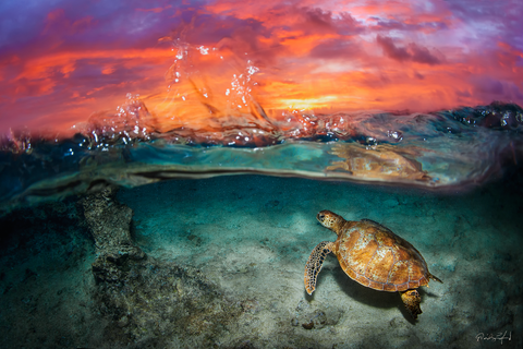 Green Sea Turtle - Sunrise