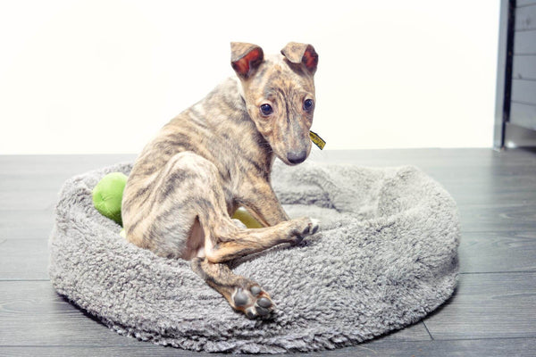 whippet puppy basket