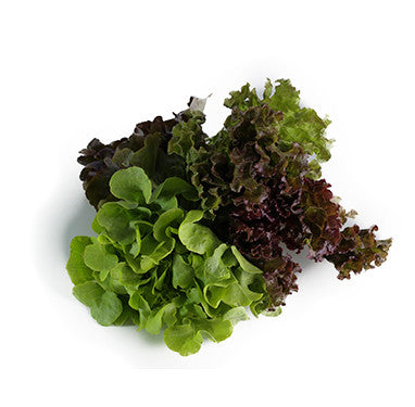 Mixed Lettuce - Organic