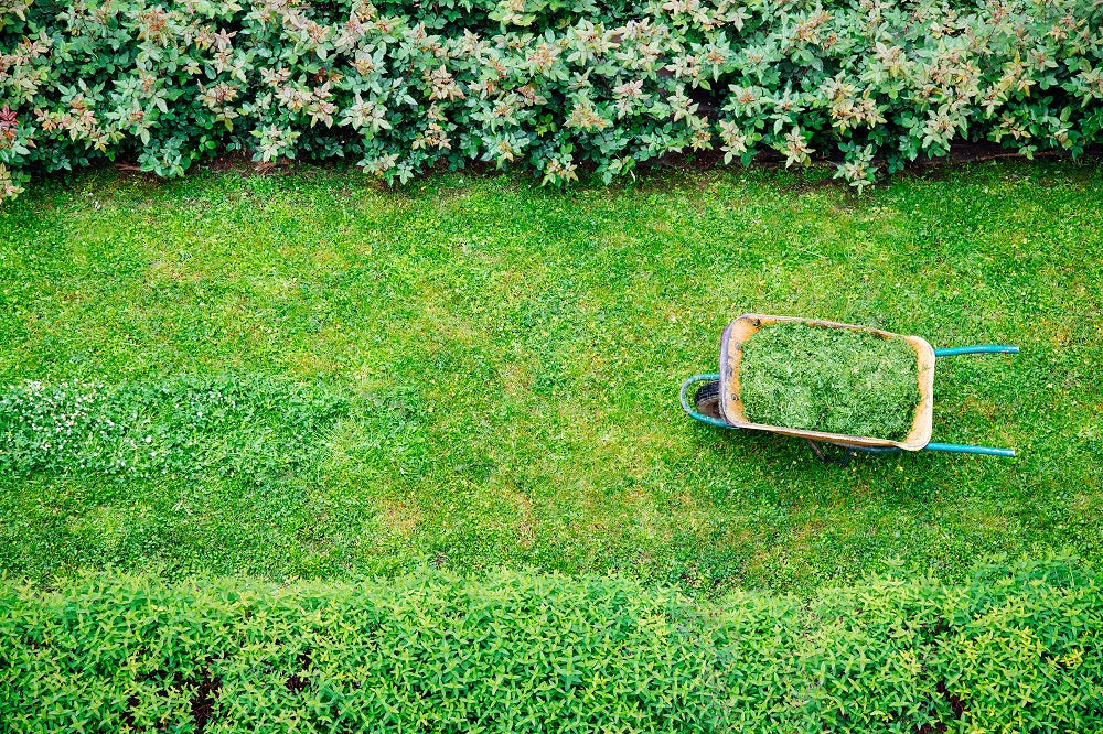 Wheelbarrow full of grass