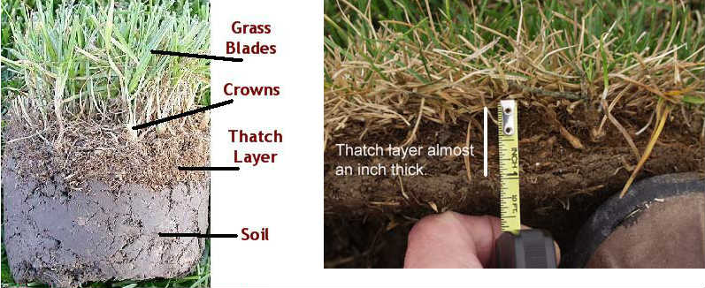 Lawn thatching, soil profile, fall cleanup to-dos