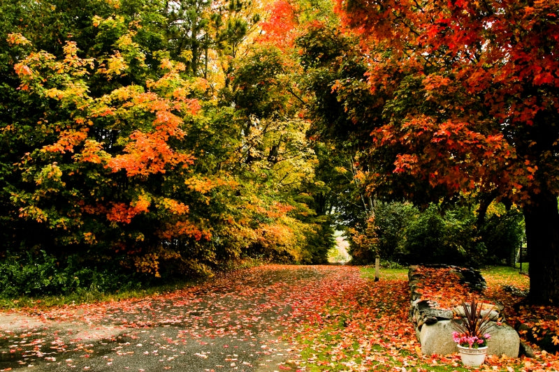 New England foliage over road, fall cleanup checklist