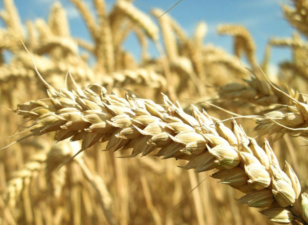 HOW EATING GLUTEN FREE FOOD CAN IMPROVE YOUR HEALTH