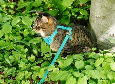 RC Pets Adventure Kitty Harness + Leash