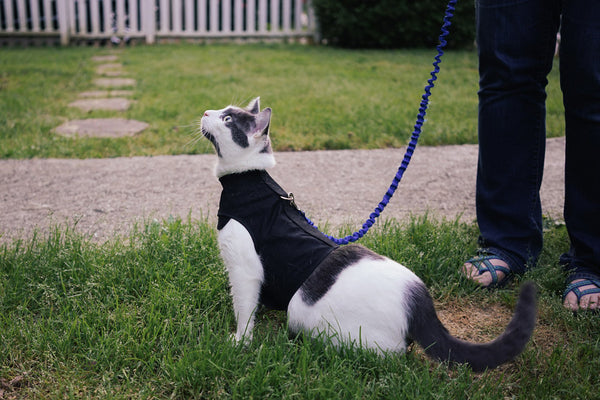 Kitty Holster® Cat Harness