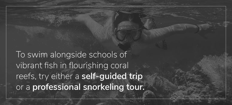 Professional Snorkeling Tour