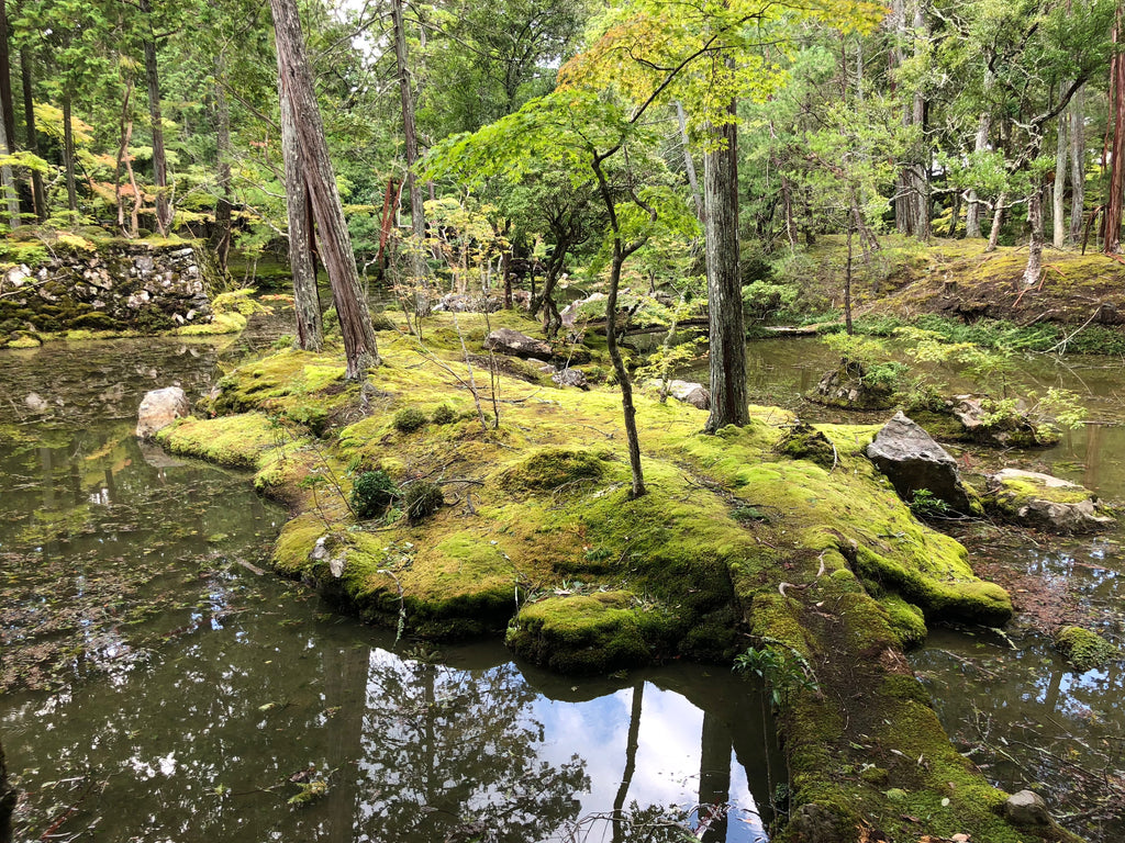Saihoji Temple (Koke-dera): Kyoto's Moss Paradise Where You Can Drop Dead and Be Okay