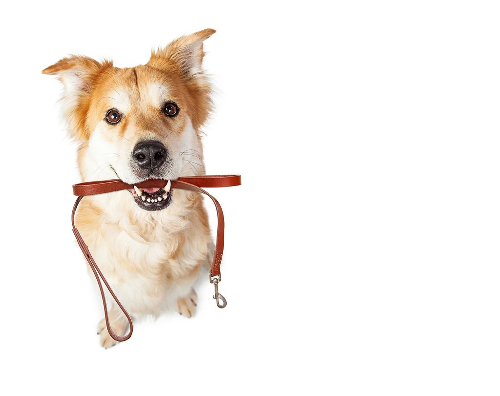 The best outdoor activities for your dog