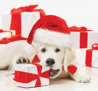Pets as Gifts – Rethinking a Puppy for Christmas