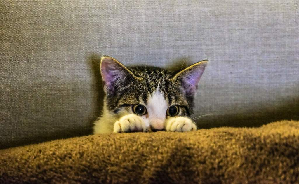 Anxiety in Cats: Identify & Treat Cat Anxiety