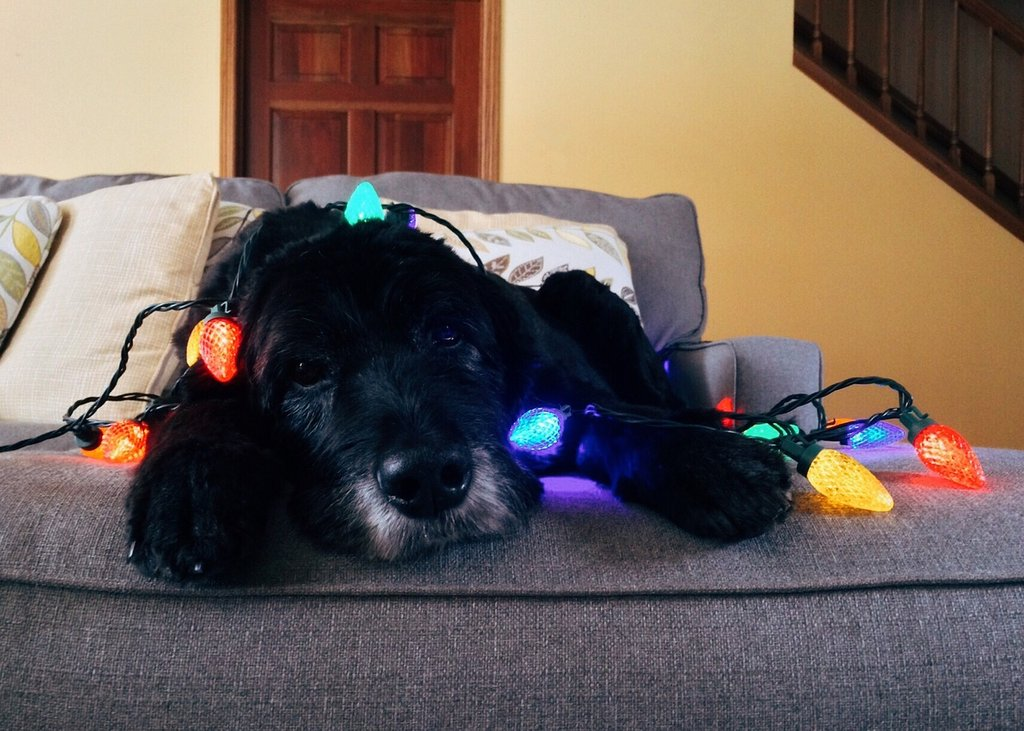 How to Calm Nervous Dog Breeds During the Holidays