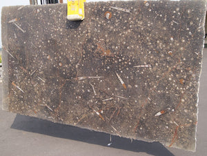 BROWN FOSSIL Limestone - Slab Series