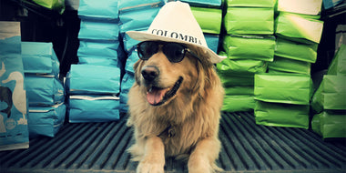 Barcos: The Dog Who Controls the North American Premium Dry Dog Food Trade for SnapWag