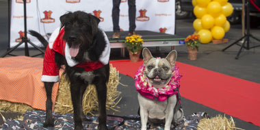 SnapWag's Pups & Pancakes Event Recap - Dog Adoption and Costume Contest